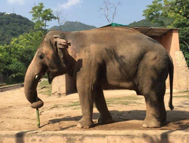 Er hat eine Familie gefunden: Der einsamste Elefant der Welt wird in das Naturschutzgebiet gebracht, um Liebe zu finden