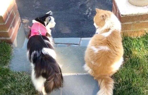 Zwei Jahre, um die Aufmerksamkeit seiner Geliebten zu bekommen: Nach langem Werben erklären sich die Katzen zum Paar