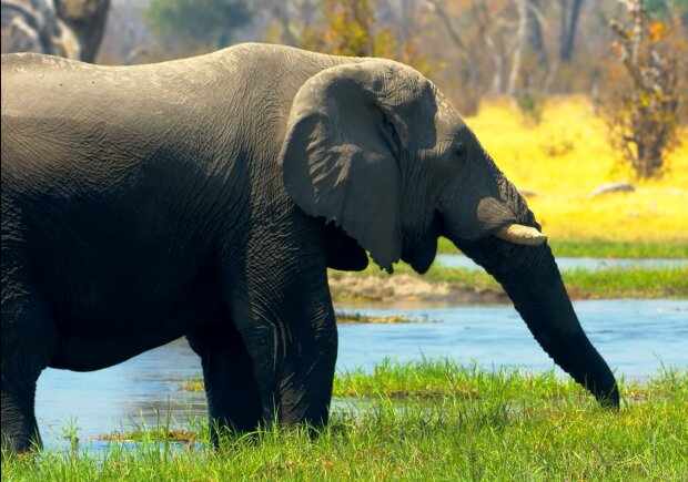 Elefant. Quelle: YouTube Screenshot