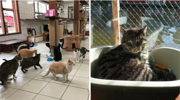 Die Frau schützte mehrere Dutzend Katzen und zog sie dann ins Haus
