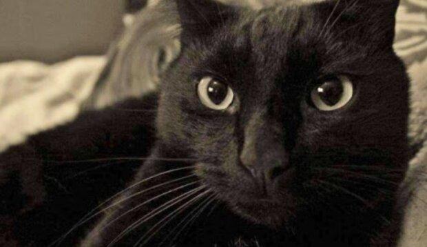 Wunder geschehen: eine Katze kam nach acht Jahren Abwesenheit nach Hause zurück