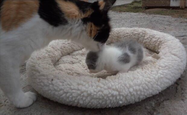 Katze und ihr Kätzchen. Quelle: Screenshot Youtube