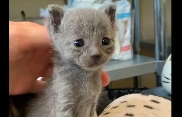 Süße Kätzchen. Quelle: YouTube Screenshot