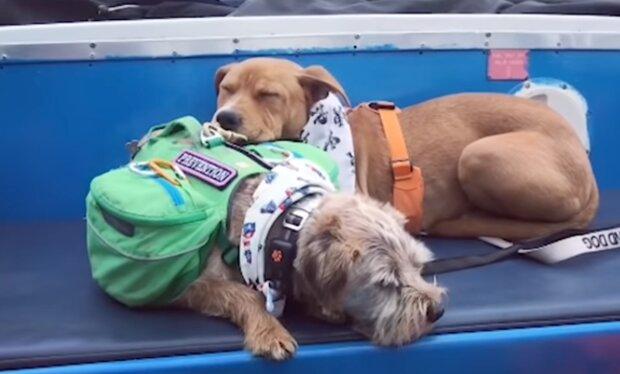 Zwei Hunde. Quelle: YouTube Screenshot