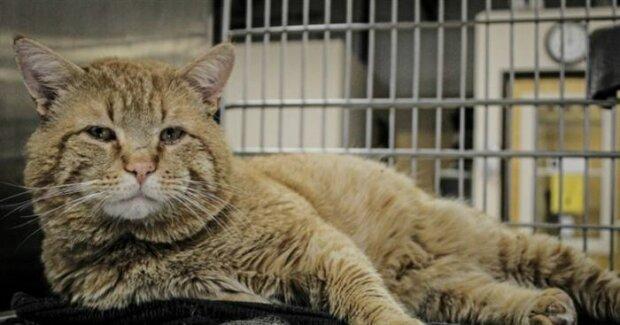 Eine riesige rote Katze befand sich in einem Tierheim und sprach plötzlich mit Menschen an