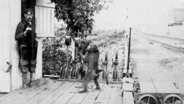 Irrte sich nie: wie der Babuin Jack als Eisenbahningenieur arbeitete