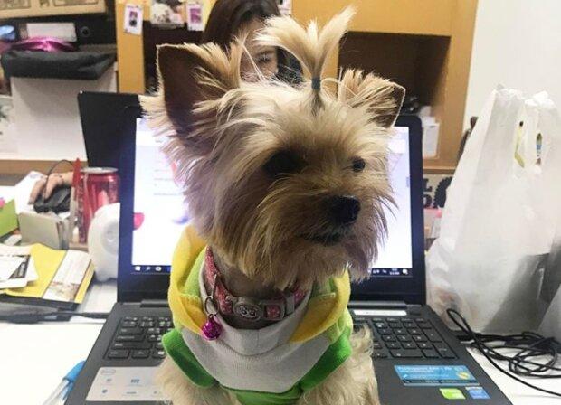 Wie Hunde Büroangestellten helfen, besser zu arbeiten
