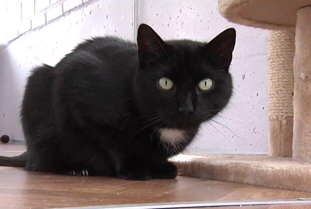 Schwarze Katze. Quelle: Screenshot Youtube