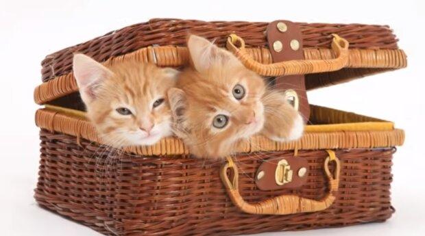 Die Kätzchen. Quelle: Screenshot YouTube