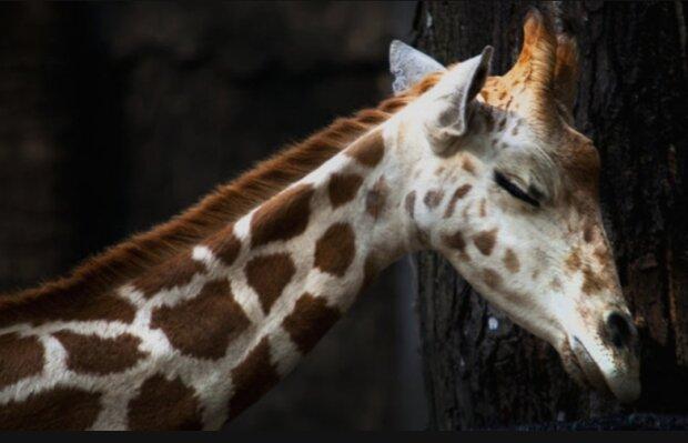 Ungewöhnliche Fakten über das Schlafen von Tieren