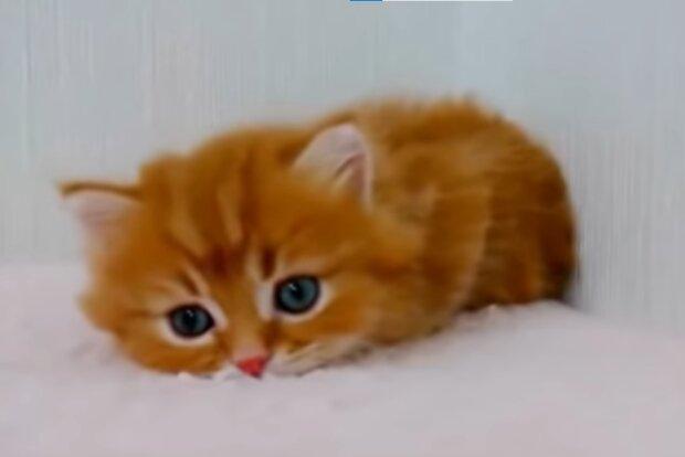 Süßes Kätzchen. Quelle: YouTube Screenshot
