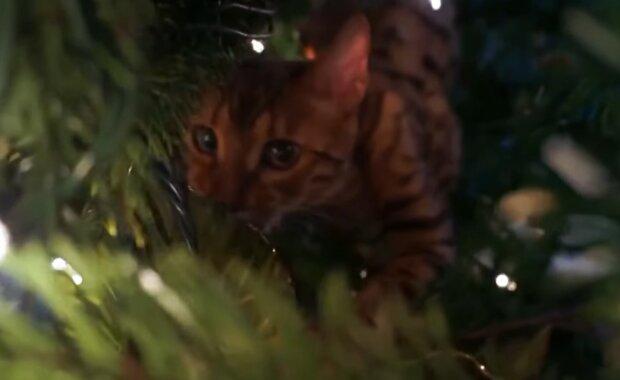Besitzer konnten ihre Katze, die sich an der auffälligsten Position versteckt hatte, lange Zeit nicht finden