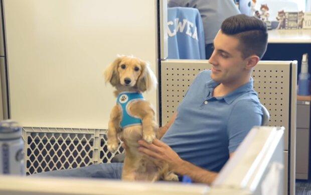 Eine Frau brachte ihren Hund monatelang in das Büro einer anderen Person: Sie dachte, es sei eine Hundetagesstätte