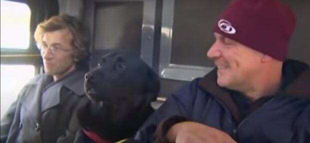 Einfallsreicher Hund fährt drei Haltestellen allein mit dem Bus, um in seinem Lieblingspark spazieren zu gehen