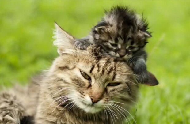 Die üblichen Momente der Mutterschaft. Quelle: Screenshot YouTube