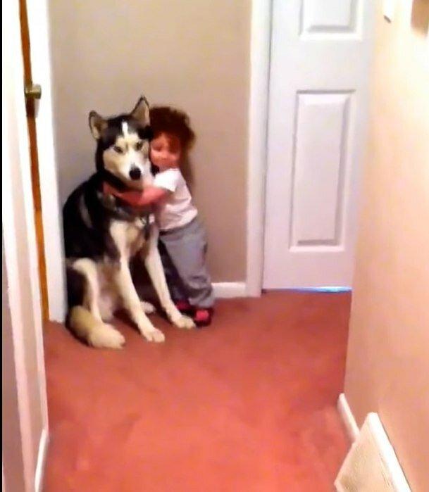 Das verängstigte Kind rannte zu dem Hund und der Husky benahm sich wie ein echter Beschützer