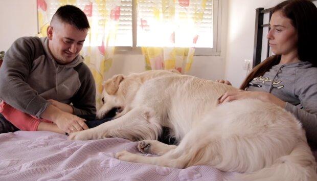 Eifersüchtiger Hund. Quelle:Screenshot YouTube