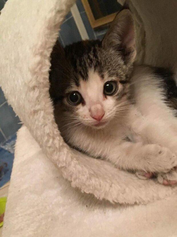 Man verließ ein kleines Kätzchen direkt in einem Laden, aber ein junger Verkäufer rettete es und wurde sein Beschützer