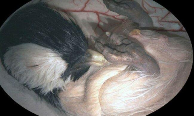 Wie Tierbabys im Mutterleib aussehen