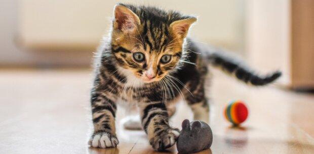 Es ist bekannt geworden, wie man eine Katze für gutes Benehmen loben muss