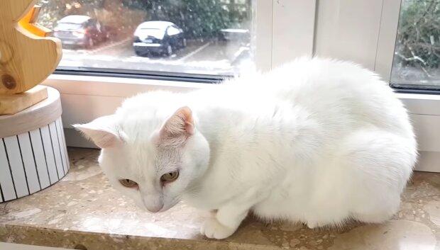 """""""Keine Logik"""": Katzen, die überall schlafen, aber nicht an ihrem Schlafplatz"""