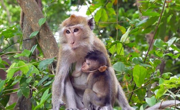 Eine Makakenfamilie. Quelle: YouTube Screenshot