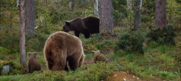Die Bären. Quelle: Screenshot YouTube