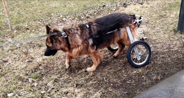 Der Hund, dem Virachat geholfen hat. Quelle: Youtube Screenshot