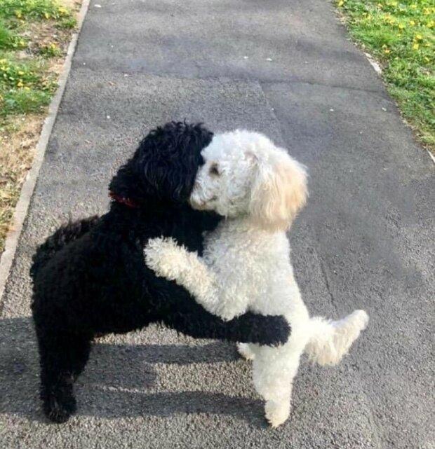 Ein Hund traf sich mit seiner weißen Kopie, sie umarmten sich so, dass es alle berührte