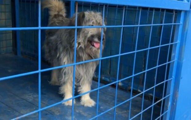 Niemand wollte den Hund wegen seines Gewichts von 40 kg in der Familie aufnehmen, aber es gelang ihm trotzdem, Besitzer zu finden