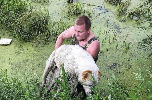 Er konnte weder bellen noch sich bewegen: ein Mann rettete einen Hund, der im Sumpf ertrank