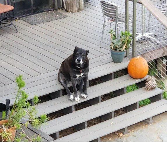 Hunde, die absolut nicht wissen, was es heißt, ein Hund zu sein
