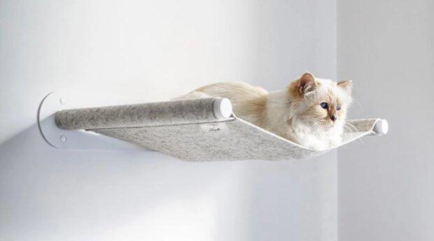 Wie Choupette, die Katze von Karl Lagerfeld, das Angebot für Haustiermöbel-Kollaborat erhielt