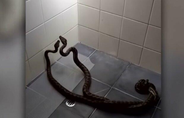 Gruselige Überraschung zu Hause. Quelle: Screenshot YouTube