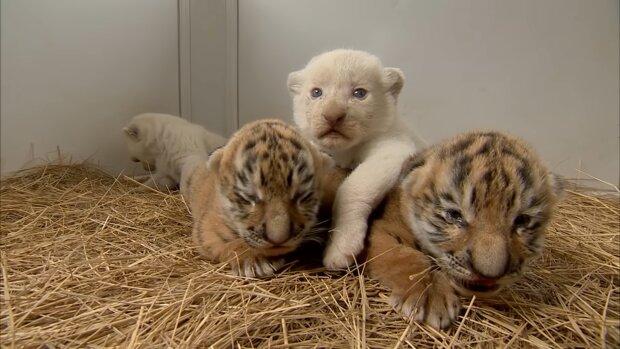 Babys. Quelle: YouTube Screenshot