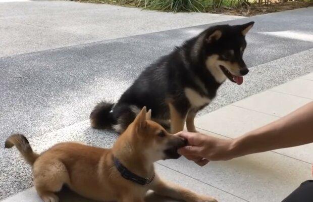 Das Schicksal unzertrennlicher Tiere. Quelle: Screenshot YouTube