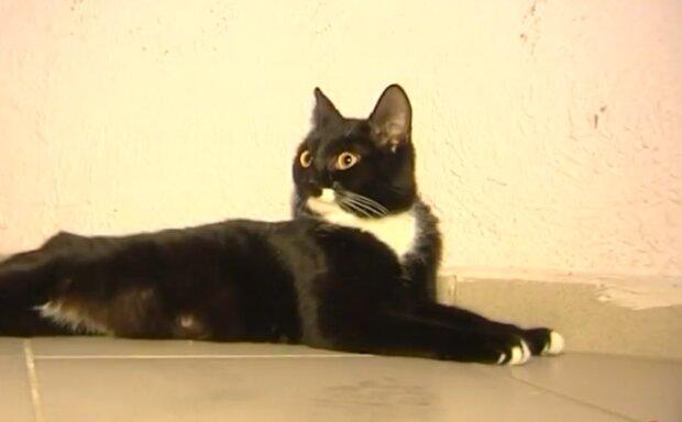 Streunende Katze. Quelle: Screenshot Youtube