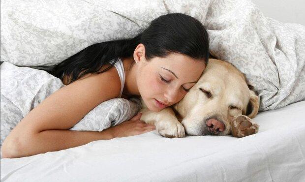 Warum es wichtig ist, den Hund bei seinem Besitzer im Bett schlafen zu lassen: Gründe, die den vierbeinigen Freund erfreuen
