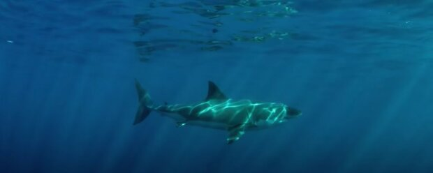 """Ein kleiner Hai mit einem """"menschlichen Gesicht"""" wird vor der Küste Indonesiens erwischt, Details"""