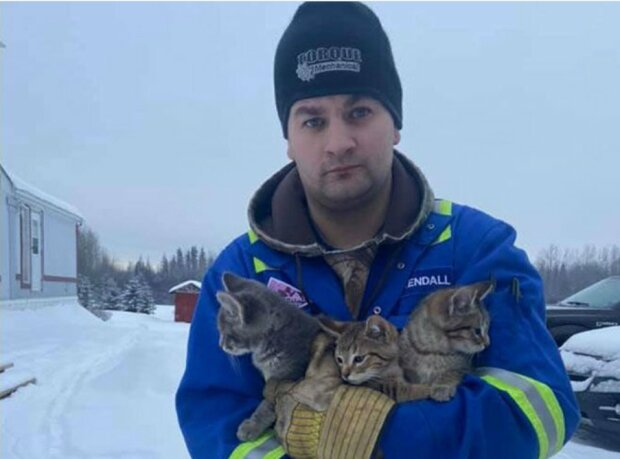 Wie ein kanadischer Arbeiter Kätzchen mit dem Kaffee aus dem Schnee rettete