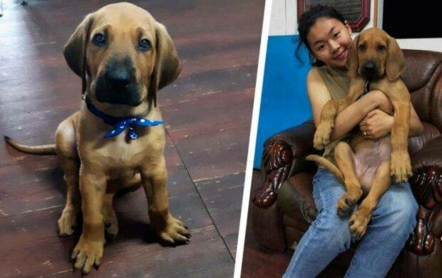 Die Familie bekam einen kleinen Welpen, aber er wuchs zu einem riesigen Hund heran