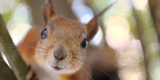 Das kleine Eichhörnchen war aus einem hohlen Baum gefallen und brauchte Hilfe