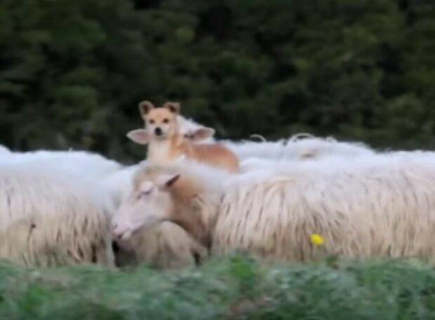 """Die Leute fotografierten einen Schäferhund während der """"Arbeit"""". Jetzt macht sich das ganze Internet über diesen Mitarbeiter lustig"""
