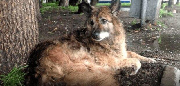 Denkmal für Naide: Ein gewöhnlicher Mischlingshund wartete seit zwölf Jahren lang auf den Besitzer