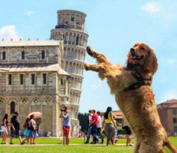Die hundefreundlichsten Städte der Welt