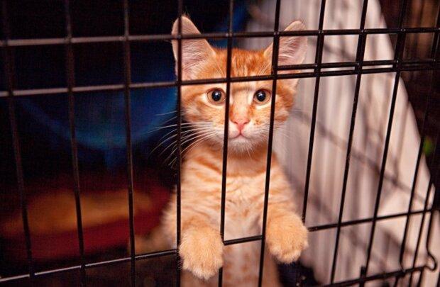 Hunderte Tiere gerettet: Die Polizei kam einem Katzenheim zu Hilfe