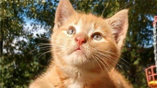 Rothaariges Kätzchen. Quelle: Screenshot Youtube
