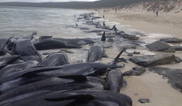 Die Freiwilligen retteten mehr als 100 Delfine, Einzelheiten sind bekannt geworden