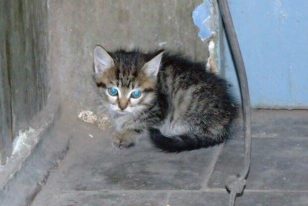 Das Kätzchen brauchte Pflege. Quelle: Screenshot YouTube