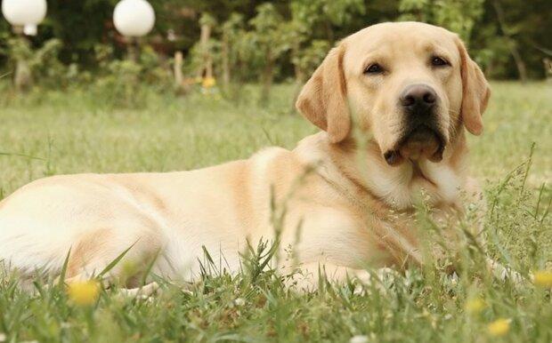 Heldhund. Quelle:Screenshot YouTube